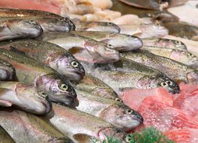 Fisch Eichrodt: Fischfeinkost und eigene Herstellung