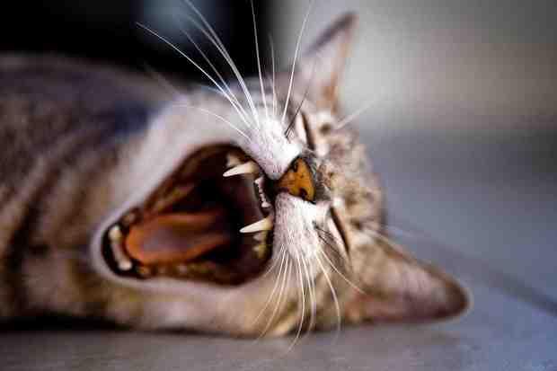 5 Hacks gegen Jetlag (illustriert mit süssen Tierbildern)